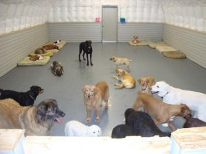 blog-dog-kennel-1